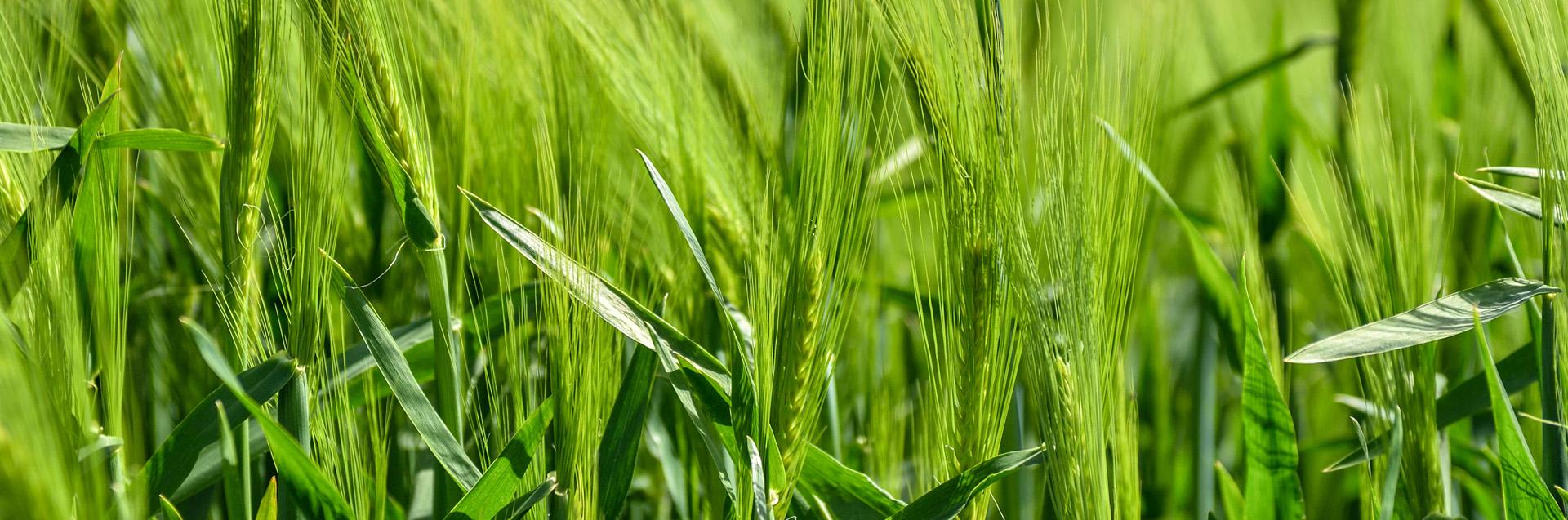 Herbal Agro Organics - Manufacturers of Organic Fertilizers